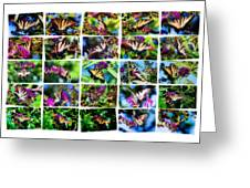 Butterfly Plethora II Greeting Card