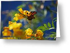 Butterfly Pollinating Flowers  Greeting Card