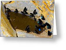 Butterfly Pool Greeting Card