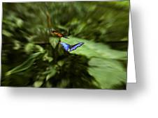 Butterfly Race Greeting Card