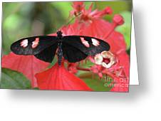 Butterfly Blush Greeting Card