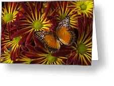 Butterfly Resting On Chrysanthemums Greeting Card
