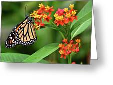 Butterfly Resting On Flower Greeting Card