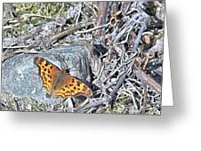 Butterfly Rock Greeting Card