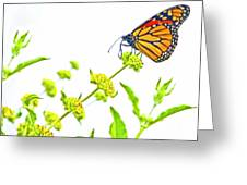 Butterfly Series #10 Greeting Card