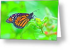 Butterfly Series #13 Greeting Card