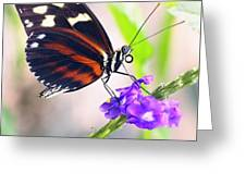 Butterfly Side Profile Greeting Card by Garvin Hunter