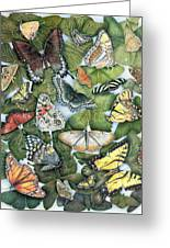 Butterfly Sightings Greeting Card