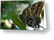 Butterfly Sitting Greeting Card