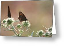 Butterfly Spring Nature Morning Scene Greeting Card