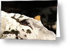 Butterfly Standing On Rock Greeting Card