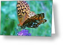 Butterfly Stare Greeting Card