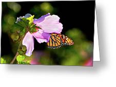 Butterfly Sunset Greeting Card by Betty LaRue