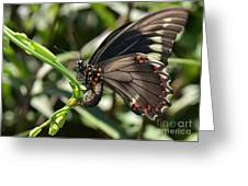 Butterfly Surprises Greeting Card