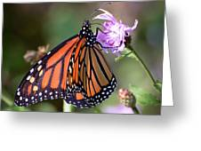 Butterfly - The Monarch  Greeting Card