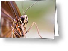 Butterfly Tongue Greeting Card