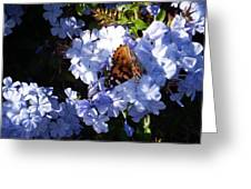 Butterfly Vi Greeting Card