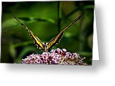 Butterfly Victory Greeting Card