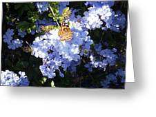 Butterfly Viii Greeting Card