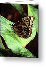 Butterfly Walk Greeting Card
