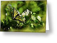 Butterfly Wall Decor Greeting Card