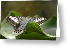 Butterfly Watching Greeting Card