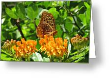 Butterfly Weed Fritillary Greeting Card