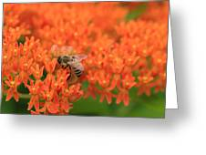 Butterfly Weed Heaven Greeting Card