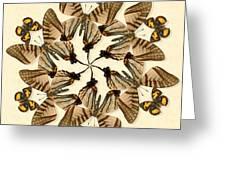 Butterfly Wheel Dance Greeting Card
