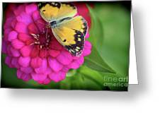 Butterfly Whispers Greeting Card