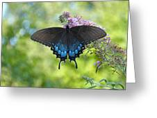 Butterfly Wish 1 Greeting Card