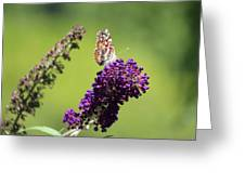 Butterfly With Flowers Greeting Card