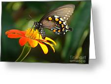 Butterfly With Orange Flower Greeting Card