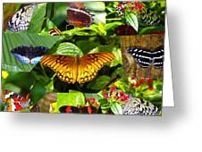 Butterfly Work 10 Greeting Card