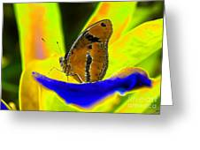 Butterfly Works Number 10 Greeting Card