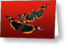 Butterfly1 Greeting Card