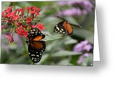 Butterfly2 Greeting Card