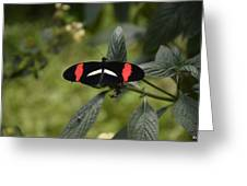 Butterfly4 Greeting Card