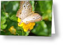 Butterflywith Dots Greeting Card