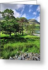 Buttermere Pines Greeting Card