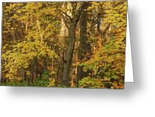 Butterscotch Autumn Greeting Card