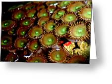 Button Polyps Greeting Card