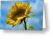 Buttonwood Sunflower 2 Greeting Card
