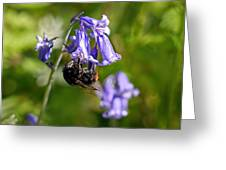 Buzzy Bee On Bluebells Greeting Card