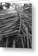 Bw Fallen Frond Greeting Card