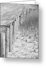 Bw Fence Line Greeting Card