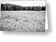 Bw Meadow Greeting Card