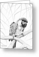 Bw Parrot Greeting Card