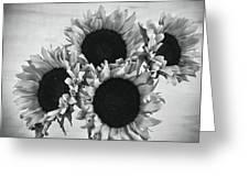 Bw Sunflowers #010 Greeting Card