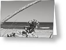 Bw8 Greeting Card